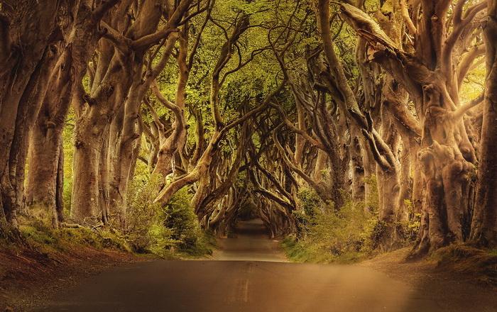 Темные Изгороди, Ирландия. Самые красивые места в мире от которых захватывает дух