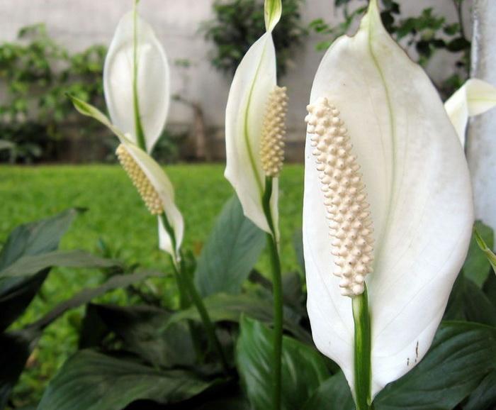 Какие цветы должны быть в доме/Блог обычной женщины