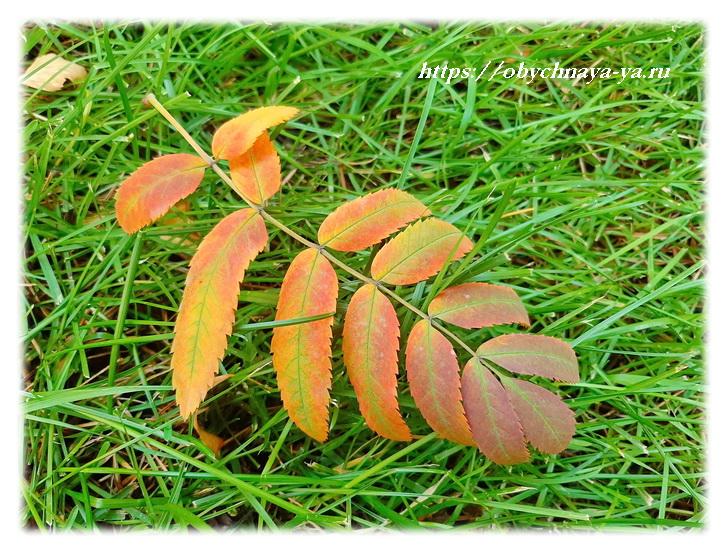 Осенняя природа/Блог обычной женщины