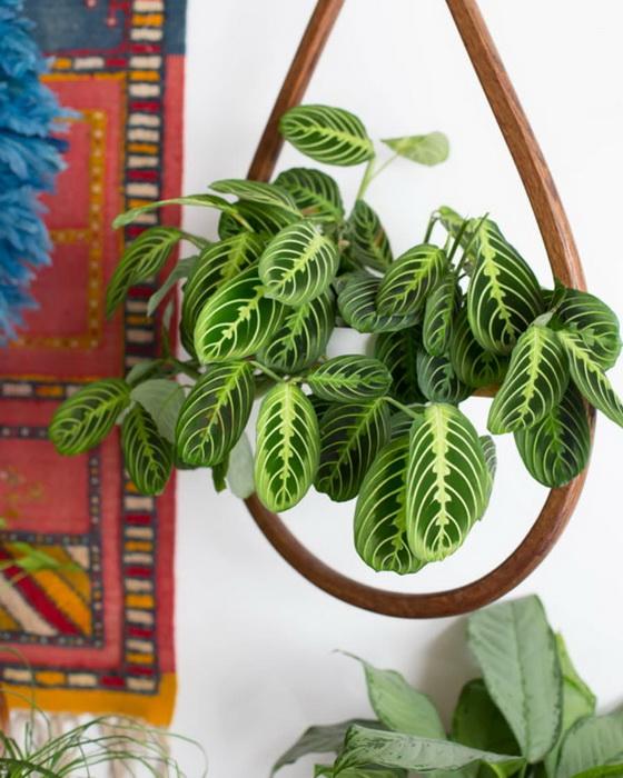 Необычные комнатные растения/Блог обычной женщины