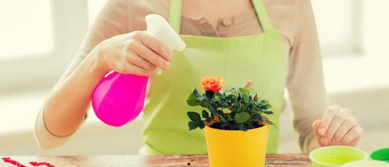 Как опрыскивать комнатные растения/Блог обычной женщины