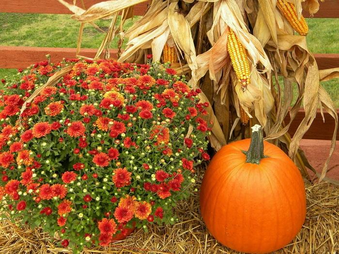 Как полюбить осень/Блог обычной женщины